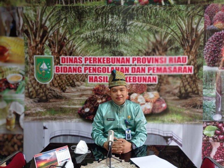 Harga Sawit di Riau Turun Rp 32,45/Kg, Berikut Ini Rincian dan Penyebabnya
